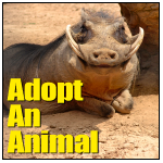 Adopt An Animal Tile